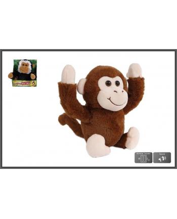 hipo Małpka fikająca 25cm 2 kolory cena za 1szt