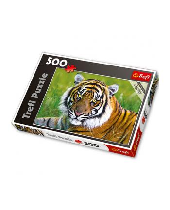 TREFL 500 EL. Tygrys