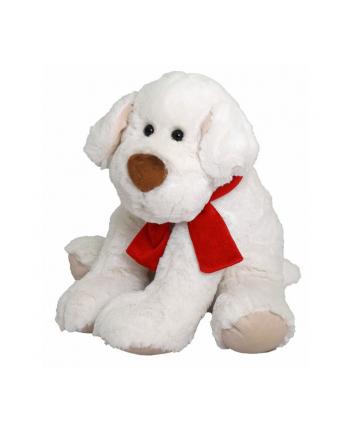 BEPPE Pies Ricco 28 cm biały z kokardą