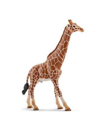 SCHLEICH Samiec żyrafy