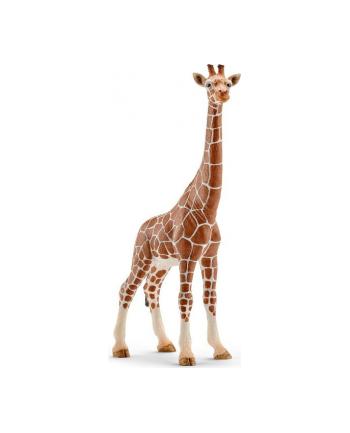 SCHLEICH Samica żyrafy