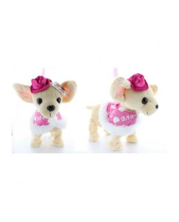 Pies na smyczy w pelerynce i czapce 1000163