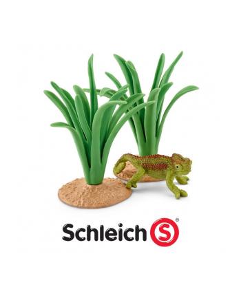 SLH 42324 Kameleon w trzcinach