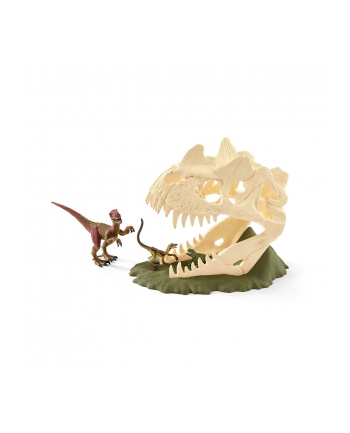 SLH 42348 Duża czaszka pułapka Velociraptor