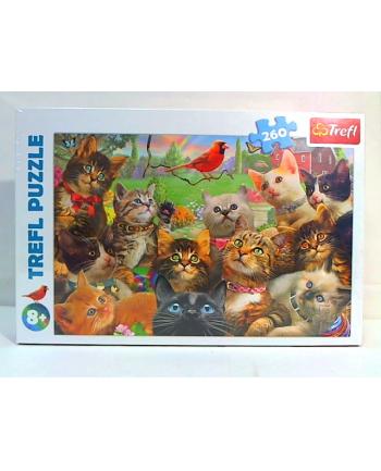 trefl Puzzle 260 KOTKI 13241