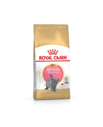 Karma Royal Canin KITTEN BRITISH (10 kg )
