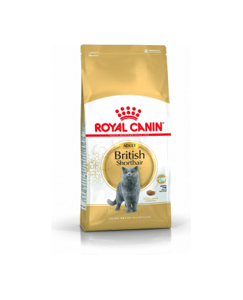 Karma Royal Canin FBN British Shorth (10 kg )
