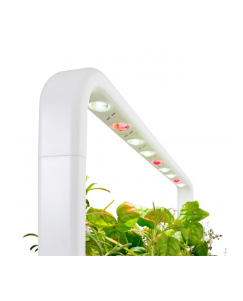 click and grow Click&Grow Inteligentna doniczka Smart Garden 9 Beige
